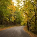 paved road in woods Giles County