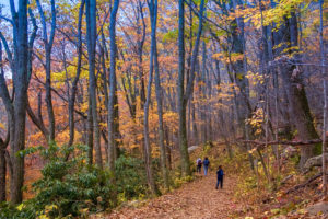 family hiking in fall forest
