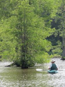 Trap Pond State Park Laurel DE
